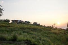 Schöne Reisterrassen lizenzfreie stockfotografie
