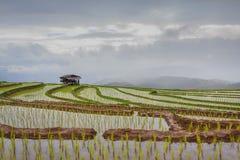 Schöne Reisterrassenansicht am regnerischen Tag Stockfoto