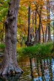 Schöne Riese-Zypresse-Bäume bedeckt mit Herbstlaub in Texas stockbild