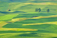 Schöne Rolling Hills im Palouse, Washington Stockfotos