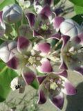 Schöne rosa Blüte Stockbild