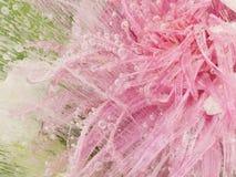 Schöne rosa Blume eingefroren im Eis Lizenzfreies Stockbild