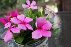 Schöne rosa Blumen Stockfoto