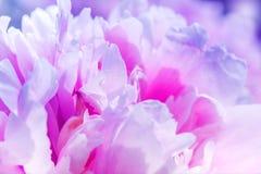 Schöne rosa Blumen Defocus. abstraktes Design Stockfotografie