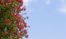 Schöne rosa Blumen gegen blauen Himmel Stockfoto