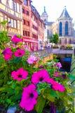 Schöne rosa Blumen mit buntem Hintergrund des traditionellen Gebäudes Lizenzfreie Stockbilder