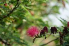 Schöne rosa Farbblume Lizenzfreie Stockfotos