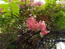 Schöne rosa Jahreszeit der Blume im Frühjahr stockbilder
