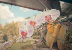 Schöne rosa Orchidee blüht in der Garten Weinlese-Art Lizenzfreie Stockfotografie