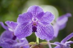 Schöne rosa Orchidee im botanischen Garten Lizenzfreie Stockfotografie