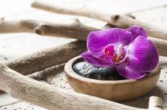 Schöne rosa Orchideenblume mit hölzerner und Mineralumwelt Stockfotos