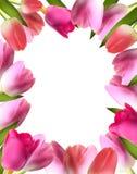 Schöne rosa realistische Tulip Frame Vector Lizenzfreie Stockfotografie