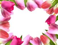 Schöne rosa realistische Tulip Frame Vector Lizenzfreie Stockfotos