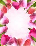 Schöne rosa realistische Tulip Frame Vector Stockfotos