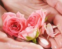 Schöne rosa Rosen gehalten in den weiblichen Händen Stockbild