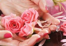 Schöne rosa Rosen gehalten in den weiblichen Händen Stockfoto