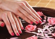 Schöne rosa Rosen gehalten in den weiblichen Händen Lizenzfreie Stockfotografie