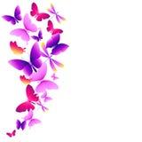 Schöne rosa Schmetterlinge, lokalisiert auf einem Weiß Stockfotografie