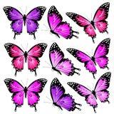 Schöne rosa Schmetterlinge, lokalisiert auf einem Weiß Lizenzfreies Stockfoto