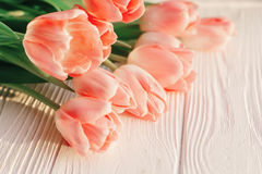 Schöne rosa Tulpen auf weißem rustikalem hölzernem Hintergrund tender Stockbild
