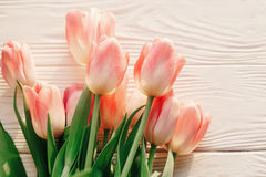 Schöne rosa Tulpen auf weißem rustikalem hölzernem Hintergrund tender Lizenzfreie Stockfotografie