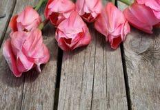 Schöne rosa Tulpen in den Tröpfchen des Taus lizenzfreie stockfotografie