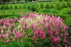 Schöne rosafarbene Blume Lizenzfreie Stockbilder