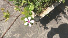 Schöne rosafarbene Blume lizenzfreies stockfoto