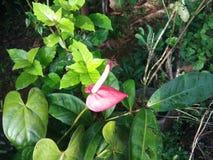 Schöne rosafarbene Blume Stockfotografie
