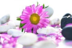Schöne rosafarbene Blume mit Steinen Lizenzfreie Stockfotos