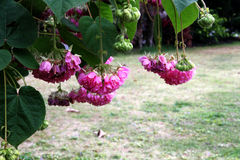 Schöne rosafarbene Blumen Stockfotografie