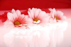 Schöne rosafarbene Blumen Stockbild