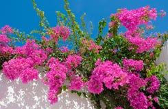 Schöne rosafarbene Blumen gegen den Himmel. Lizenzfreies Stockfoto