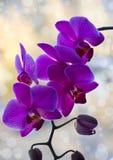 Schöne rosafarbene Orchidee Lizenzfreie Stockfotos