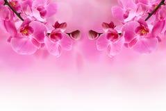 Schöne rosafarbene Orchideeblume Stockbilder