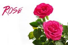 Schöne rosafarbene Rose Lizenzfreies Stockfoto