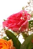 Schöne rosafarbene Rose Stockbild