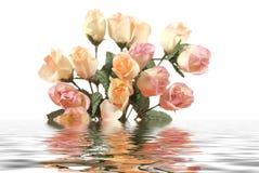 Schöne rosafarbene Rosen mit Wasserreflexion getrennt auf weißem Hintergrund Stockfotografie