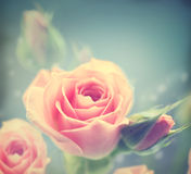 Schöne rosafarbene Rosen Weinlese redete Karte an Stockbild
