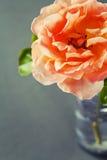 Schöne Rose Lizenzfreie Stockfotografie