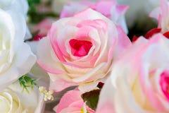 Schöne Rose Lizenzfreie Stockbilder