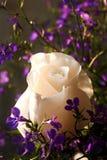 Schöne Rose, die mit purpurroten Wildflowers umgibt Lizenzfreie Stockbilder