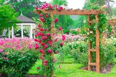 Schöne Rose Garden Stockbilder