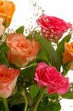 Schöne Rosen Lizenzfreies Stockfoto