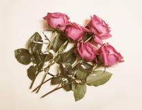 Schöne Rosen auf beige Hintergrund Abbildung der roten Lilie Stockfotografie