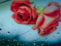Schöne Rosen auf Glastisch lizenzfreies stockfoto
