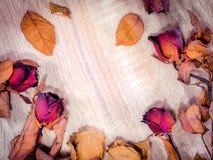 Schöne Rosen durch Zeit stockbilder