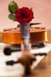 Schöne Rosen und Violine! stockbild