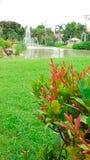 Schöne rote Anlage mit großem Rasen im Garten Stockfotografie