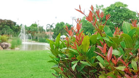 Schöne rote Anlage mit großem Rasen im Garten Lizenzfreie Stockbilder